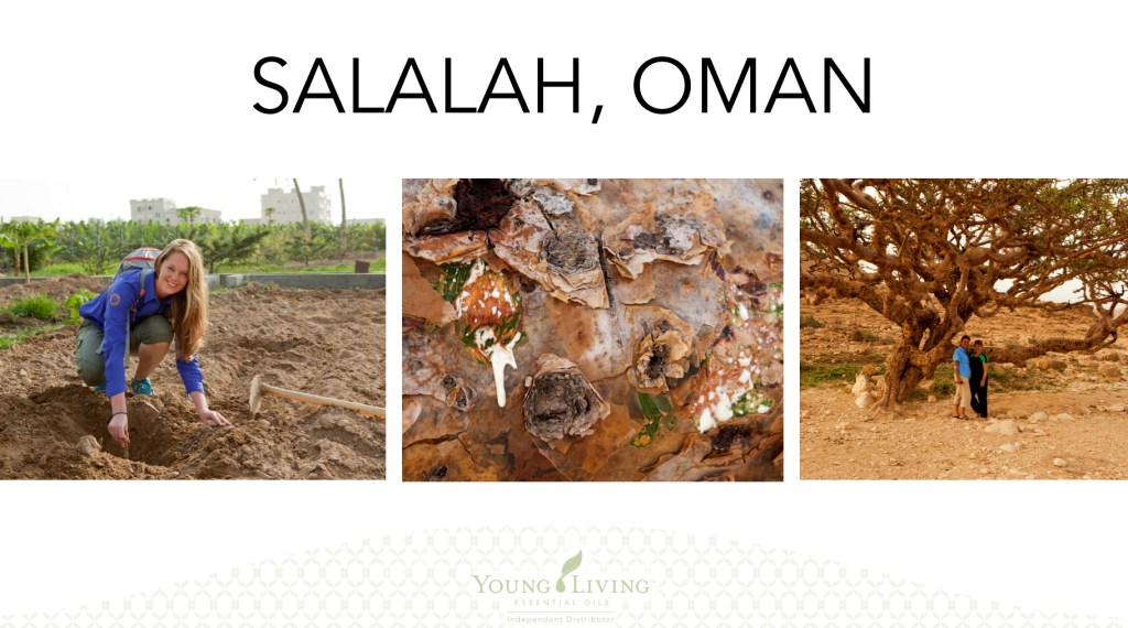 Young Living, Young Living Essential Oils, Farms, Seed to Seal, Oman