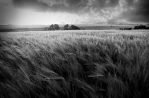 Plain field