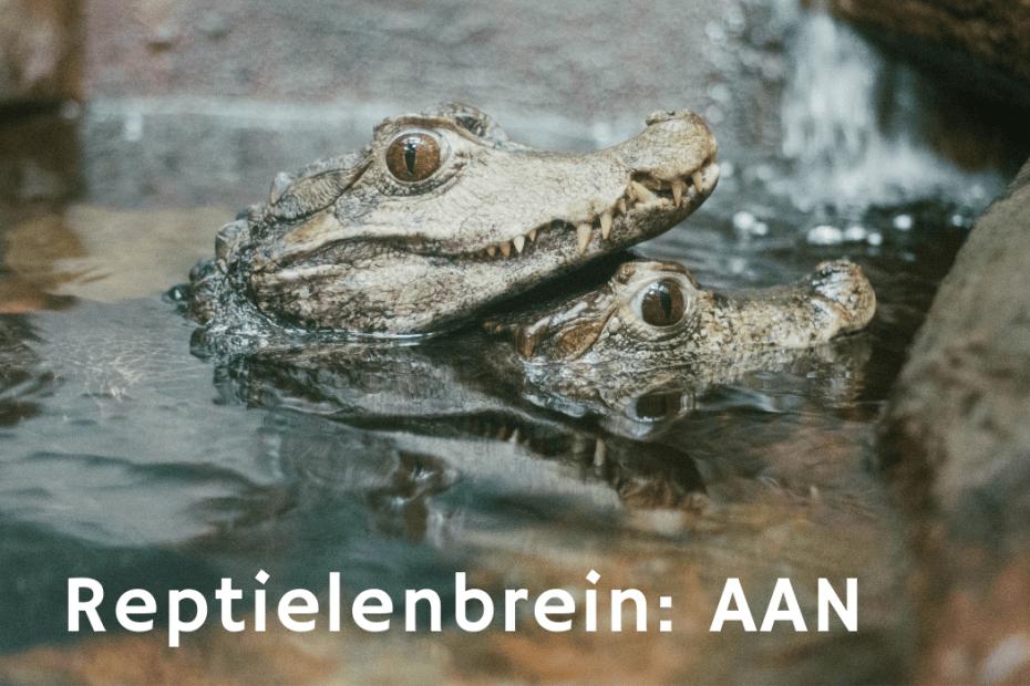 Reptielenbrein AAN