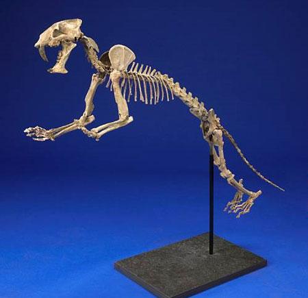 fossilcat