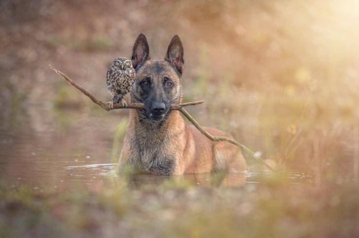 owldog