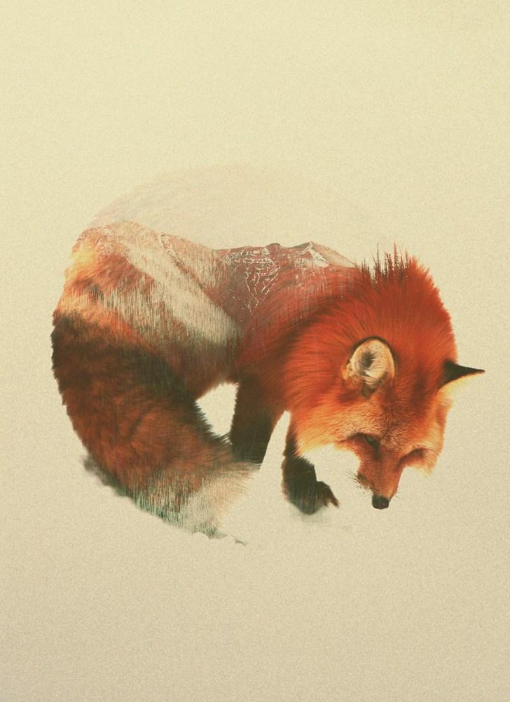 andreas-fox