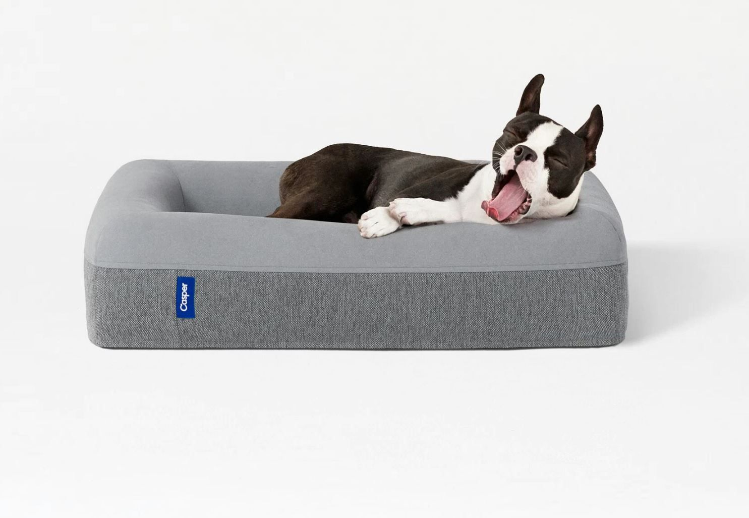 The best new luxury holiday gifts for dogs