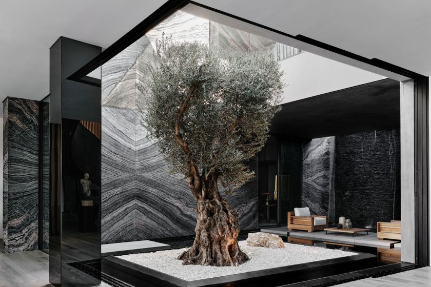 trophy trees wealthy residential homes