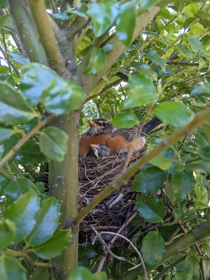 robins nest New York