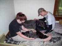 04212012-Dog-Photos-Puppies-Ziva-Abby-Herucles-033-300x225.jpg