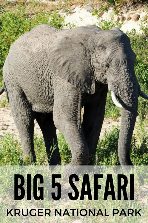 Big 5 safari in Kruger National Park