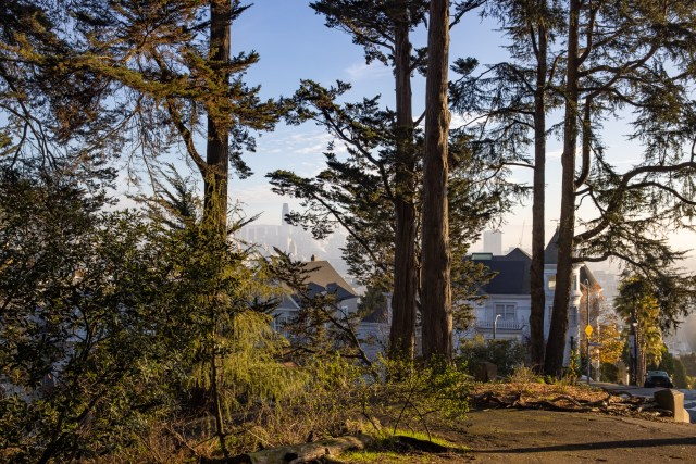 Looking through the trees in Buena Vista Park at Ambassador Hormel's home and downtown