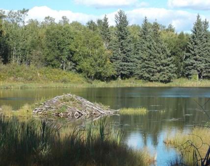 lake-458532_1920