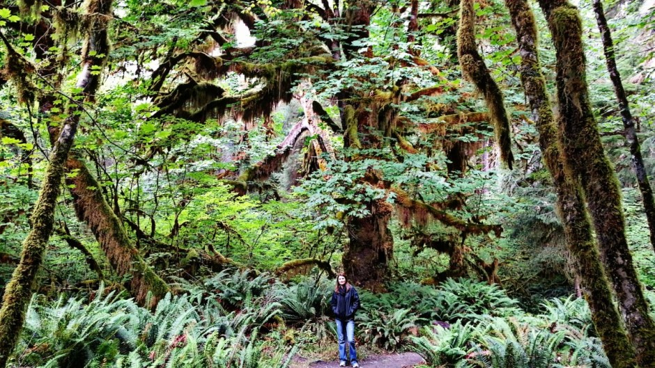 Hoh Valley Rainforest - Olympic National Park