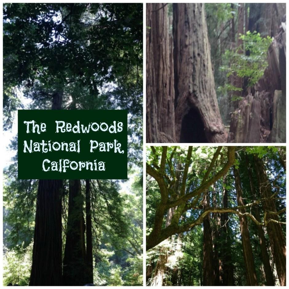 Redwoods - National Park Service