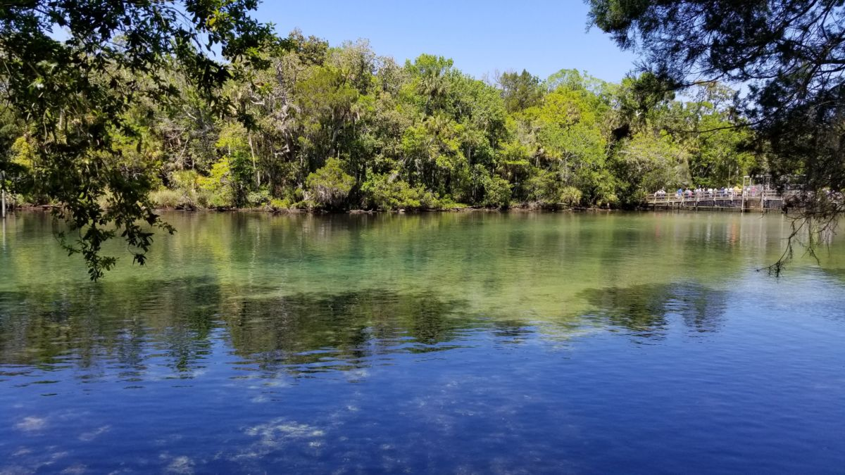 homosassa springs singles & personals Browse oodle homosassa springs, fl classifieds to find everything you need from jobs to pets, apartments to cars, find homosassa springs, fl classified ads on oodle.