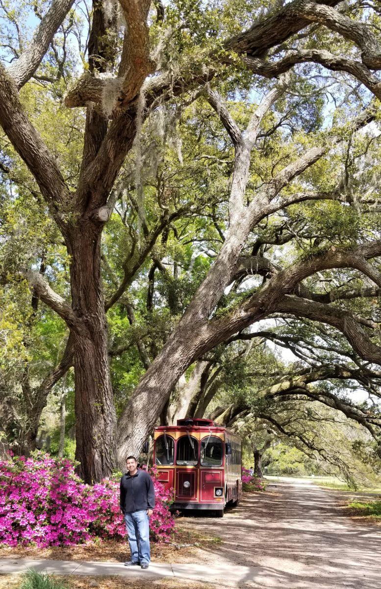 Charleston Tea Plantation: Tour America's One and Only Tea ...