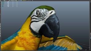 parrot_06