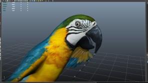 parrot_07