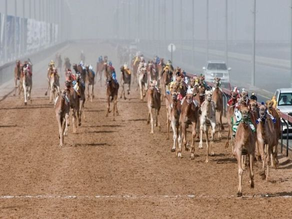 Al Marmoum Camel Racing