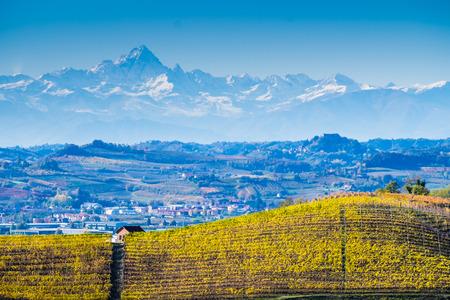 70519511 - langhe vineyards in autumn