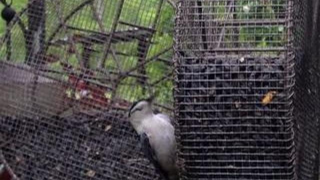 How to make a Trash-to-Treasure Bird Feeder