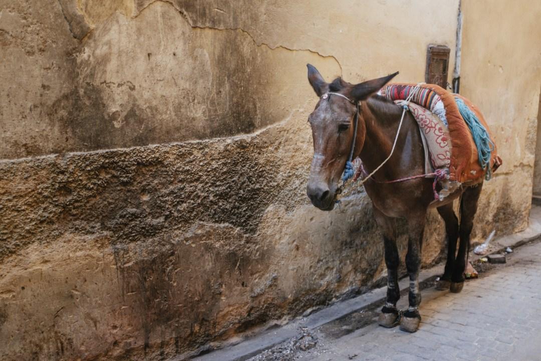 Morocco_Fes_Donkey