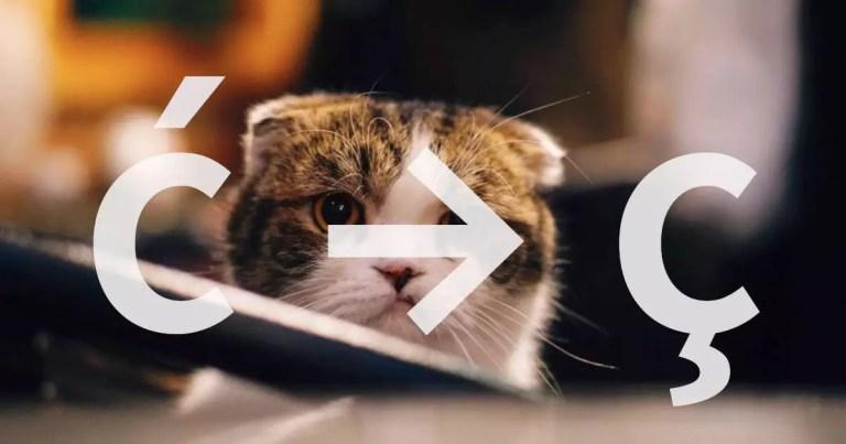 foto de gato sobreposto com os símbolos ć, seta para direita e ć