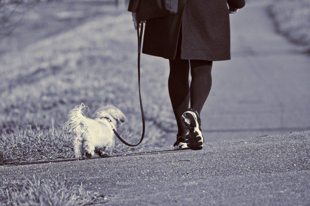 woman, walking, dog