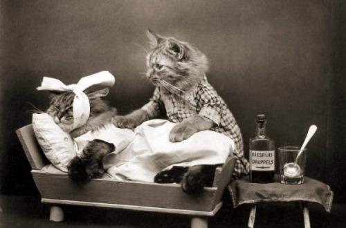 Kiespijn tandarts poezen