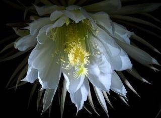 florais do Hawaii