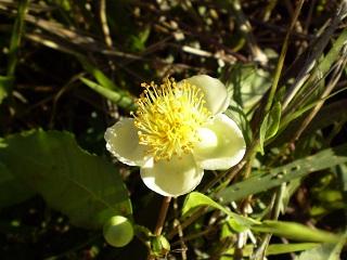 florais do sul