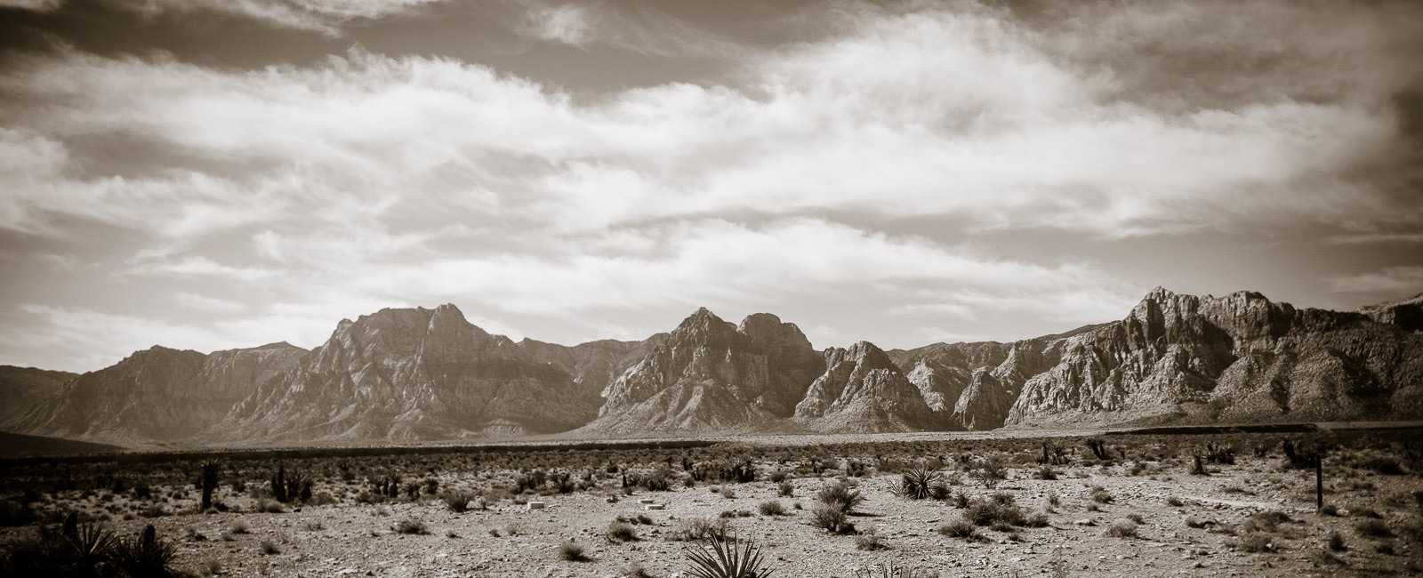 4 Lessons the Desert Can Teach Healthcare Marketers