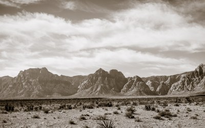 4 Lessons the Desert Can Teach Healthcare Marketing Professionals