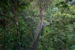 Series of Rope Bridges at Canopy Walk