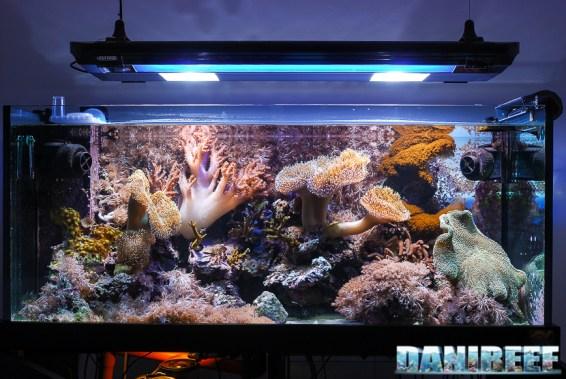 200709 Acquario marino con coralli molli layout 02 Copyright by DaniReef