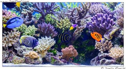 L 39 incredibile acquario marino di gaetano baiardi for Acquario marino 100 litri prezzo