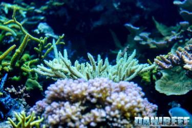 2015_12 Madagascar Reef Aquarium at Zoo Zurich75
