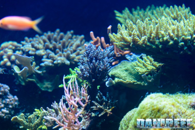 2015_12 Madagascar Reef Aquarium at Zoo Zurich91