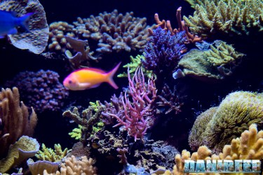 2015_12 Seriatopora histrix at Madagascar Reef Aquarium at Zoo Zurich50
