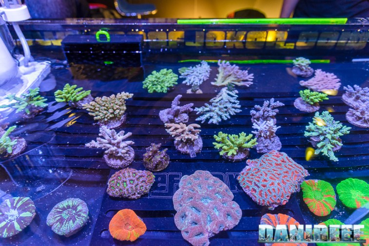 201610-coralli-petsfestival-reef-joker-61-copyright-by-danireef