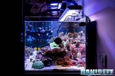 201701 acquario marino, layout 04 Copyright by DaniReef