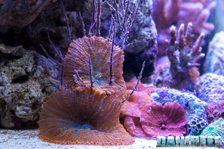 201701 animali, coralli 11 Copyright by DaniReef