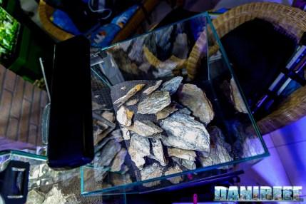 201704 acquario club, aquascaping, itau 27 Copyright by DaniReef