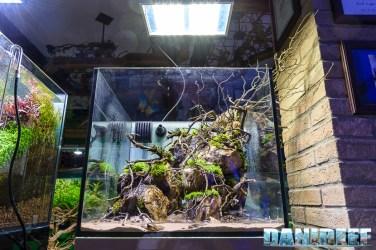 201704 acquario club, aquascaping, itau 37 Copyright by DaniReef