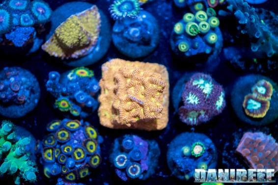 2018_09_Coralli, macna, taleario, unrivaled reefs_65
