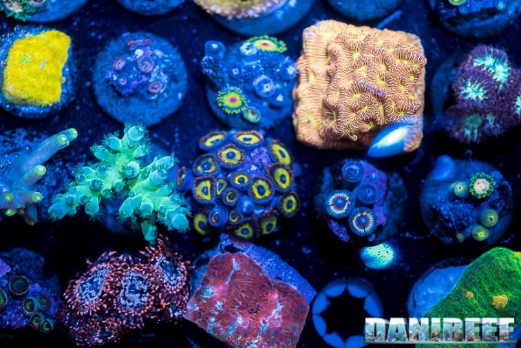 2018_09_Coralli, macna, taleario, unrivaled reefs_66