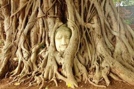 Buddha head embedded in a Banyan tree