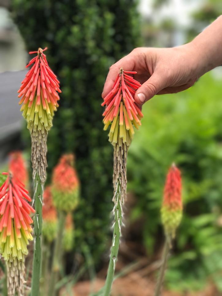 Highlands North Carolina flowers