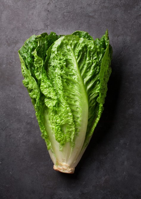 A romaine lettuce crop, an understudied habitat for fungal microbes