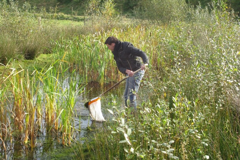 Collecting water beetles in nature reserve De Kaaistoep, The Netherlands (2011)