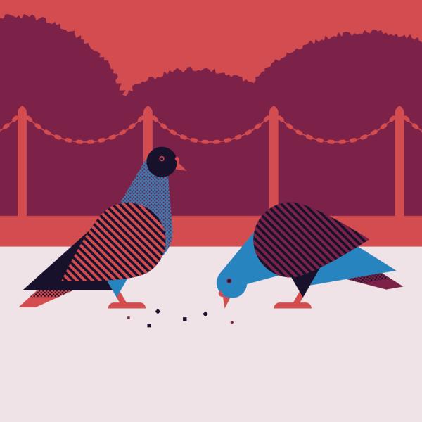 Park Pigeons