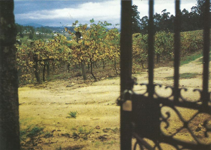 The vineyards of Quinta do Aveleda, Penafiel, Vinho Verde