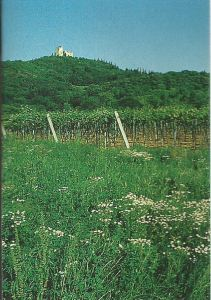 The Santi vineyards outside Verona